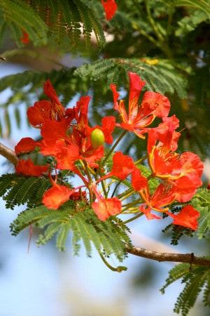 Bermuda Flowers