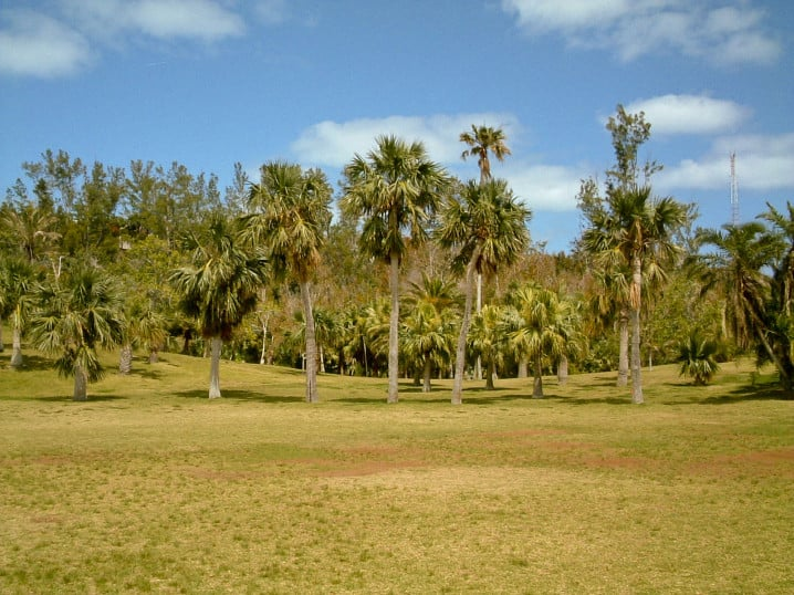 View of trees at the Arboretum in Devonshire Parish, Bermuda